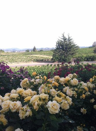 RUSTIC at Francis Ford Coppola Winery: I don't think there could be a more perfect dinner view.