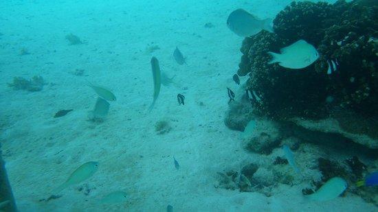 InterContinental Bora Bora Le Moana Resort : バンガロー下の海