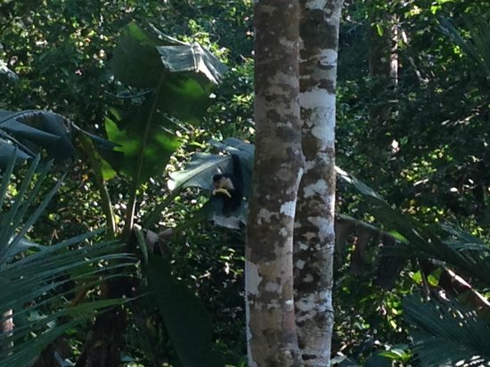 Monkey visiting Jungle Creek