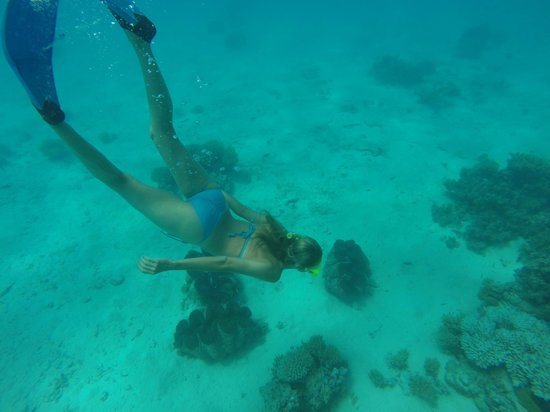 Wet & Wild Aitutaki: Diving down to the huge clams