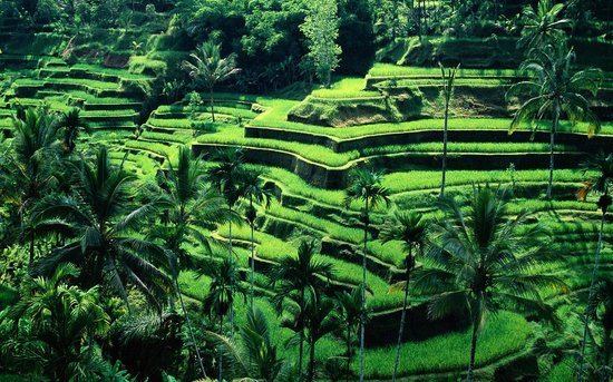Ubud Private Tours