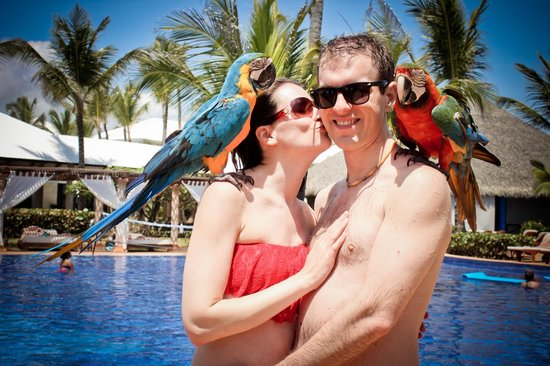 Excellence Punta Cana: Parrots poolside!