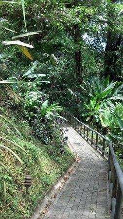 Lost Iguana Resort & Spa: Path to the restaurant on premises