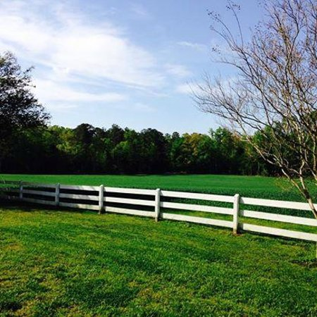The Bed and Breakfast at Peace Hill Farm: back yard