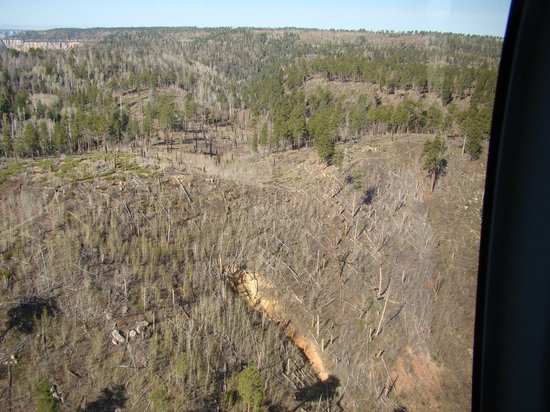 Papillon Grand Canyon Helicopters: North rim recovering from Outlet Fire Year 2000.