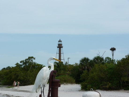 Sanibel Island Lighthouse: Egret on fishing pier