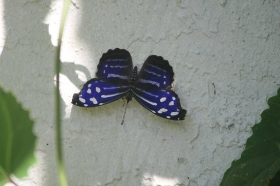 Butterfly World: Many butterflys bred and hatched here at the sanctuary