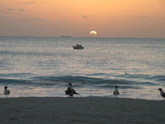 Starfish Jolly Beach Resort : Birds, boat & sundown