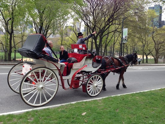 Central Park Sightseeing : 馬車も
