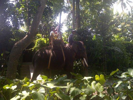 Bali Zoo : Elephant ride, sayang kami tidak mencoba