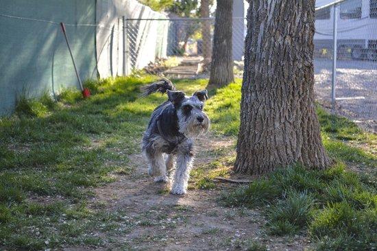 Grand Junction KOA : Pet Play Area