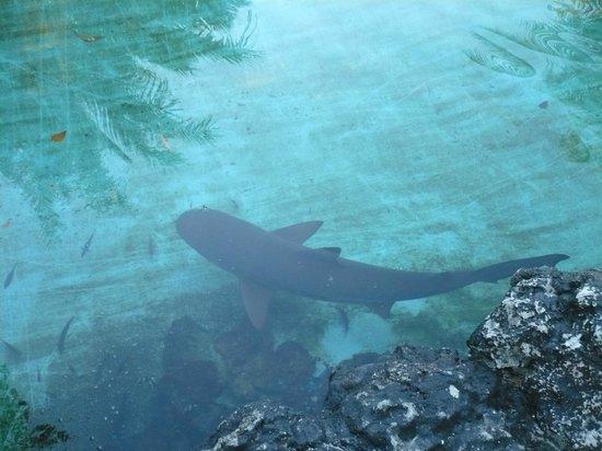 Bluewater Maribago Beach Resort: 鮫
