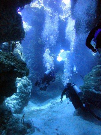 Dive with Cristina : Palancar Bricks