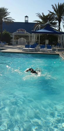Palace Casino Resort: G. Brown enjoying an afternoon swim.