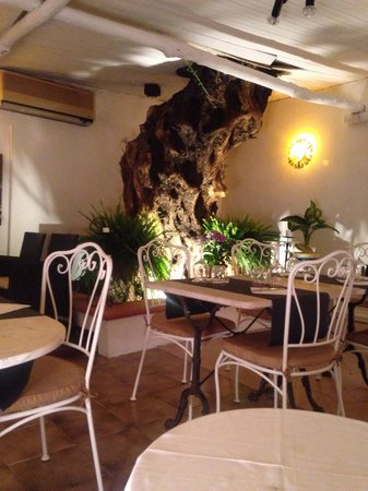 La Zagara Bianca: A very old olive tree grows up through the roof of the restaurant.