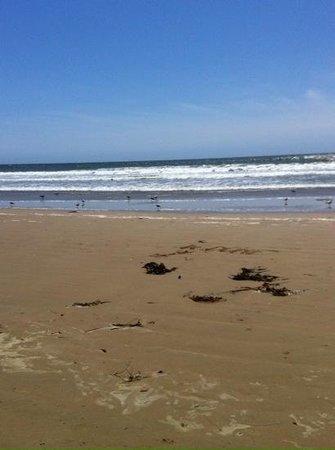 SeaCrest OceanFront Hotel : strand