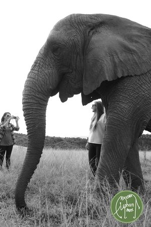 Knysna, Sudáfrica: Posing with the Elephants