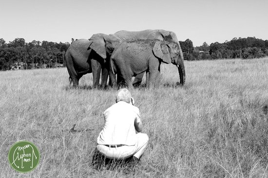 كنيسنا, جنوب أفريقيا: Taking a photo while taking a photo....