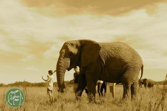 كنيسنا, جنوب أفريقيا: How to do a selfie...with an elephant prop..