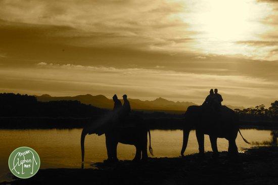 كنيسنا, جنوب أفريقيا: Sunset at the Knysna Elephant Park