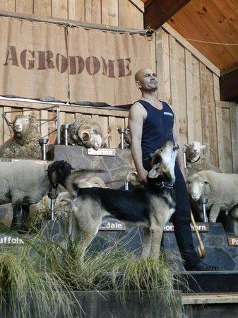 Agrodome: Farm Show