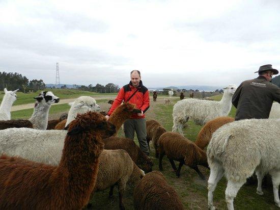 Agrodome: Farm Tour