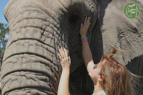 Knysna Elephant Park: Touched for a lifetime!