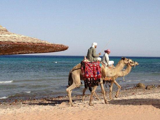 Sofitel Taba Heights: plaża