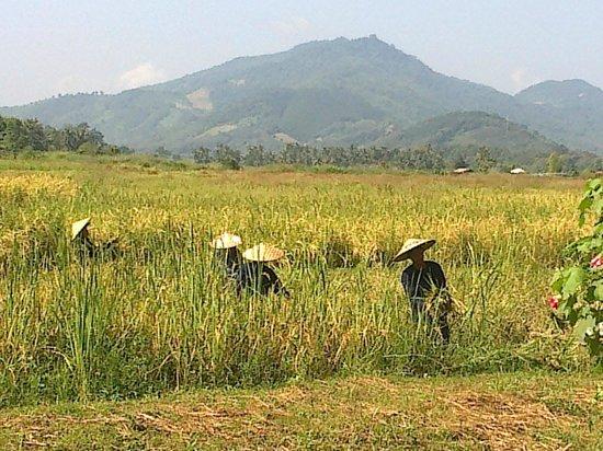 Santi Resort & Spa: vue rizières