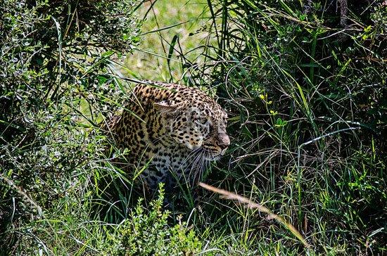 Governor's Camp : Safari