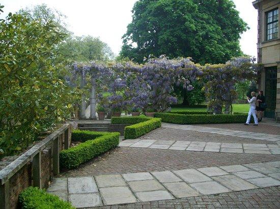 Eltham Palace and Gardens : Wisteria
