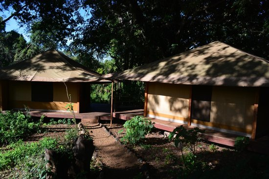 Rhino River Camp: A view of the tents