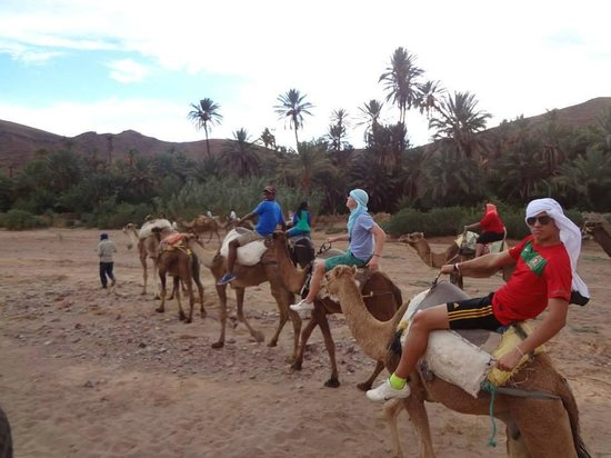 Marrakesh Garden: Camel riding neaby