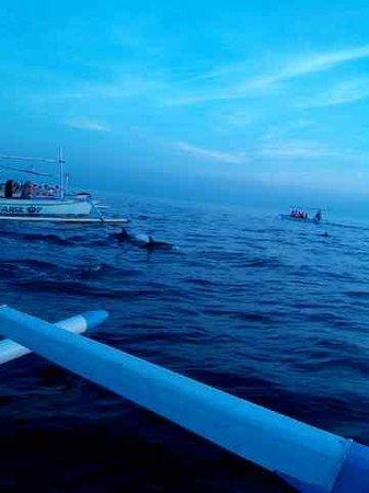 Lovina Beach : dolphin show