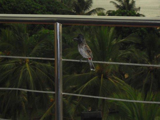 Eden Resort & Spa: near the room