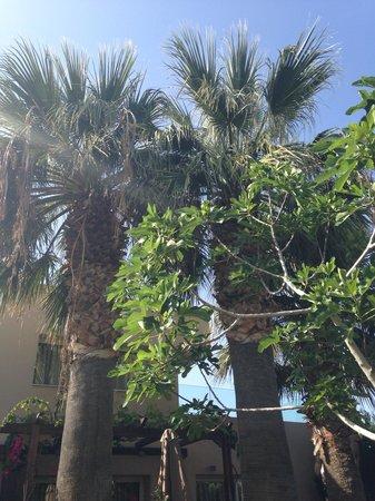 Blue Bay Resort Hotel: Пальмы на территории