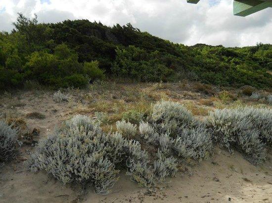 Olbia, Italia: Vegetazione sulla spiaggia