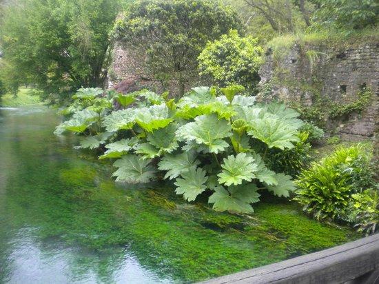 piante verdi bild von giardino di ninfa cisterna di latina tripadvisor. Black Bedroom Furniture Sets. Home Design Ideas