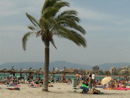 Playa de Palma El Arenal : Plaża