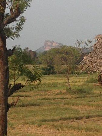 The Hideout Sigiriya : Sigiriya Rock ..a lovely bike ride away