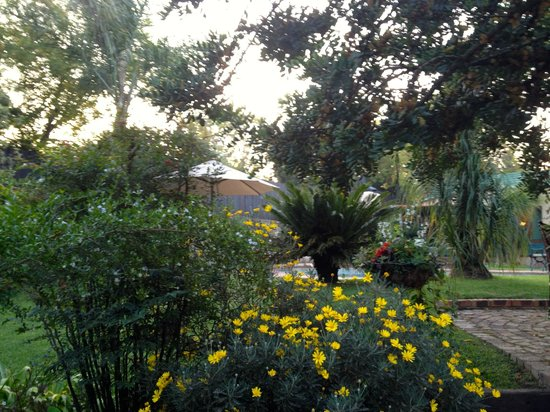 Claires of Sandton: lovely peaceful garden