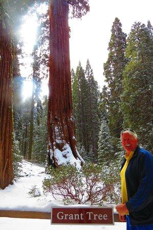 General Grant Tree Trail: General Grant Tree