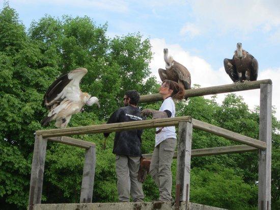 Rocher des Aigles : Les vautours...