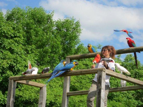 Rocher des Aigles : Les perroquets...