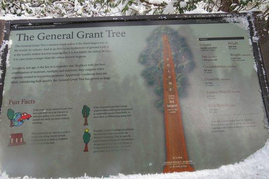 General Grant Tree Trail: History Board