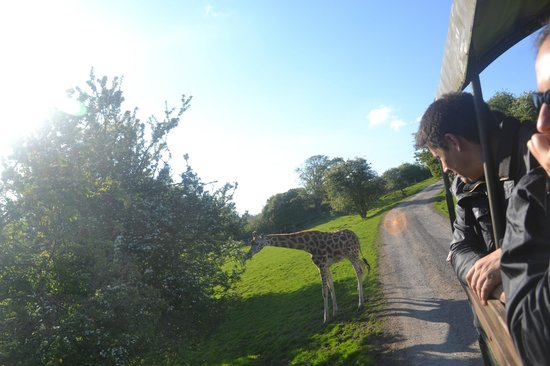 Giraffe Lodge: Safari!