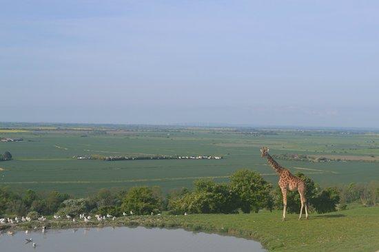 Giraffe Lodge : Giraffes wandering for a drink on the morning