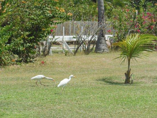 Nisbet Plantation Beach Club : Outside on the loan