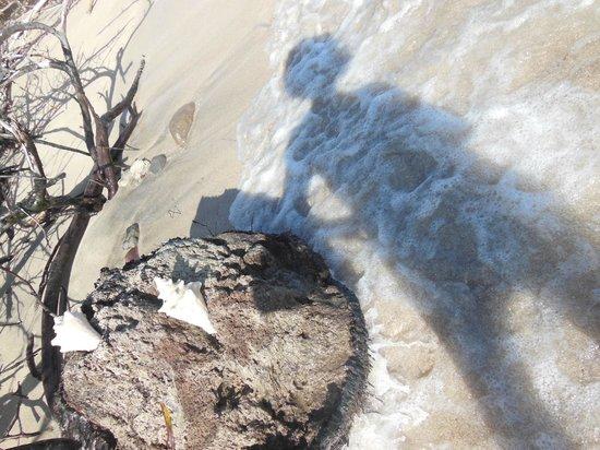 Nisbet Plantation Beach Club: Silhouette Foam & Seashell