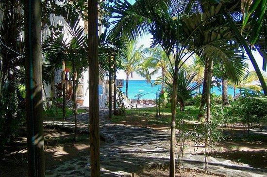 Hibiscus Beach Resort & Spa: jardin de l'hotel